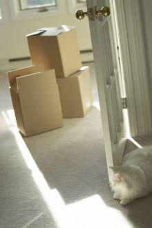 5 pravidel při pronájmu bytu